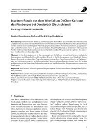 ONM_2009_Brauckmann_Westfalium.pdf