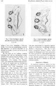 Documento completo - SeDiCI - Page 2