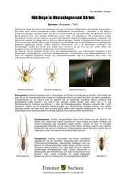 Spinnen (Araneae) [Download,*.pdf, 0,78 MB] - Landwirtschaft in ...