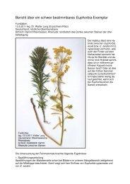 Bericht über ein schwer bestimmbares Euphorbia-Exemplar