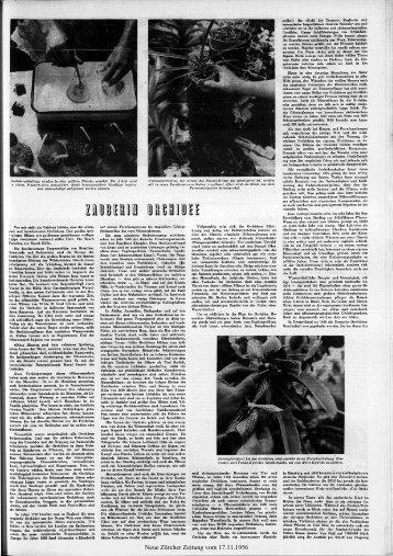 Neue Zürcher Zeitung vom 17.11.1956
