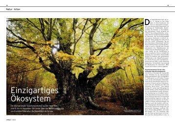 Einzigartiges Ökosystem - Weltnaturerbe Buchenwälder