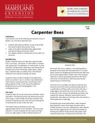 Print: HG 29 Carpenter Bees - University of Maryland Extension