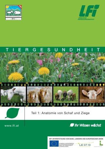 Anatomie von Schaf und Ziege - Landesverband Bayerischer ...