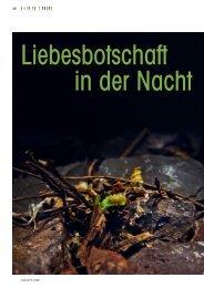 Glühwürmchen: Liebesbotschaft in der Nacht - aufrad.ch