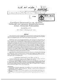 Cypridopsis lanzarotensis n. sp., ein neuer Ostracode von Lanzarote