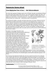 BGaktuell019 Cercidiphyllum