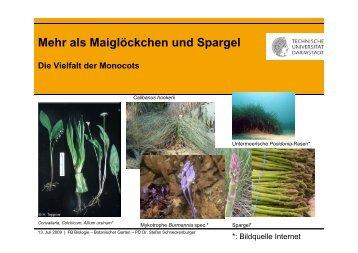 Schneckenburger_Monocots_ 2009 - Fachbereich Biologie der TU