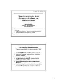 Präparationsmethoden für die Elektronenmikroskopie von ...
