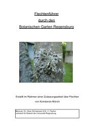 Flechtenführer durch den Botanischen Garten Regensburg