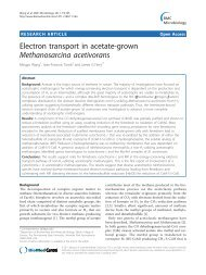 Electron transport in acetate-grown ... - BioMed Central