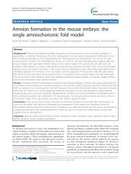 Amnion formation in the mouse embryo: the single ... - BioMed Central