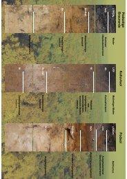Bodenprofils - Bodennetzwerk