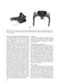 this paper - Bulletin of insectology - Page 6
