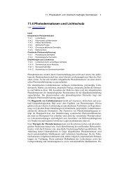 11.4 Photodermatosen und Lichtschutz - Derma-Net-Online.de