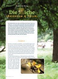 Die Eiche, Originalauszug aus Lichtfokus 30, als PDF