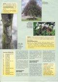 Bäume kontrollieren! - Seite 2