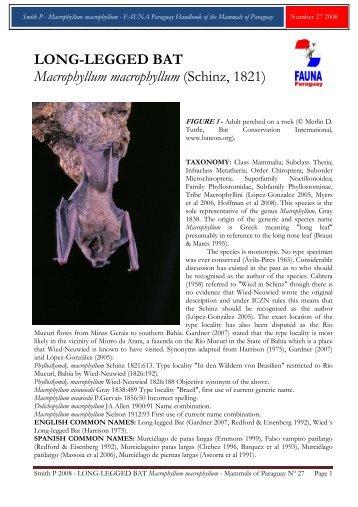 LONG-LEGGED BAT Macrophyllum ... - FAUNA Paraguay