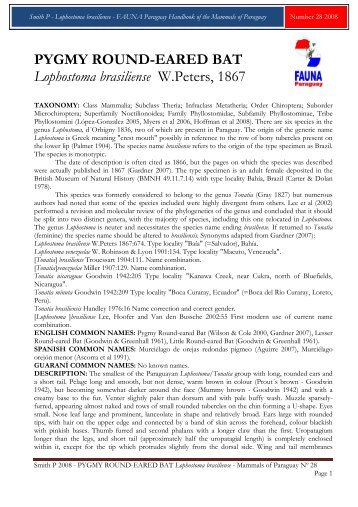 PYGMY ROUND-EARED BAT Lophostoma ... - FAUNA Paraguay