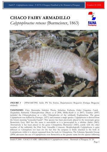 CHACO FAIRY ARMADILLO Calyptophractus ... - FAUNA Paraguay