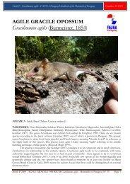 AGILE GRACILE OPOSSUM Gracilinanus agilis ... - FAUNA Paraguay