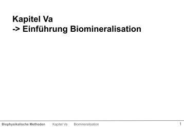 Was ist Biomineralisation?