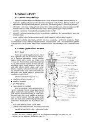 Výstupní jednotky: kostra a svaly - FBMI