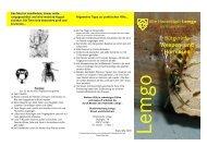 Merkblatt Bienen und Wespen - Freiwillige Feuerwehr Lemgo