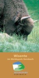Wisente im Weidepark Schwarzwald als PDF (0,75 MB)
