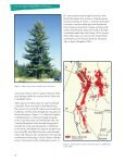 The Reproductive Biology of Western White Pine - Forest Genetics ... - Page 6