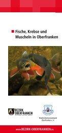 Fische, Krebse und Muscheln in Oberfranken - Bezirk Oberfranken