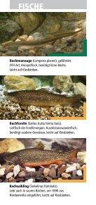 Fische, Krebse und Muscheln in Oberfranken - Bezirk Oberfranken - Seite 4