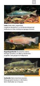 Fische, Krebse und Muscheln in Oberfranken - Bezirk Oberfranken - Seite 5