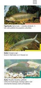 Fische, Krebse und Muscheln in Oberfranken - Bezirk Oberfranken - Seite 7