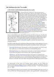 Die Funktionsweise einer Nervenzelle