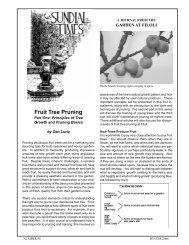 Fruit Tree Pruning - Filoli