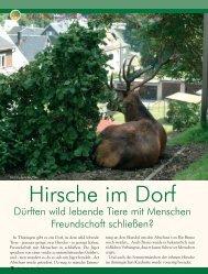 Hirsche im Dorf - Magazin Freiheit für Tiere