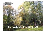 Der Wald als Ort der Kraft - BFW