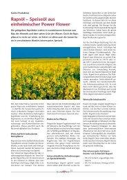 Rapsöl – Speiseöl aus einheimischer Power Flower - GastroBern