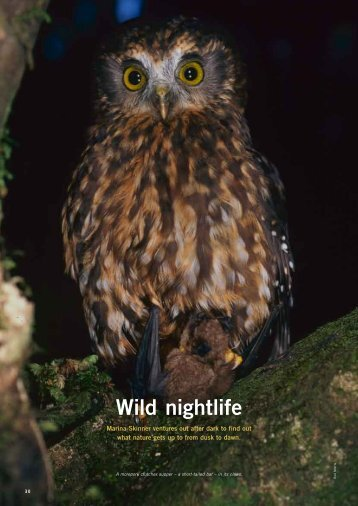 Wild Nightlife (PDF version) - Forest and Bird