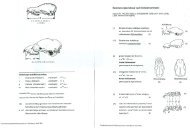 Bestimmungsschlüssel nach Schädelmerkmalen - Fledermaus-Bayern