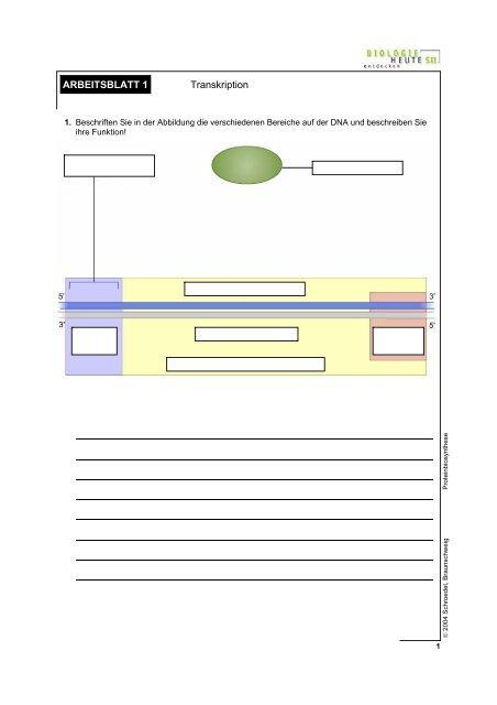 proteinbiosynthese arbeitsblatt transkription badmintonshop. Black Bedroom Furniture Sets. Home Design Ideas