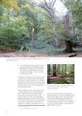 Broschüre - Schleswig-Holsteinische Landesforsten - Seite 6