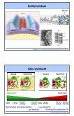 Glomerulopathien - Fortbildung - Seite 5