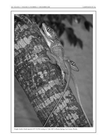 Iguana b&w text - Florida Museum of Natural History - University of ...