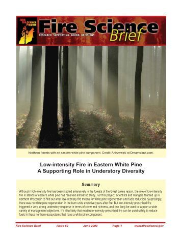 Low-intensity Fire in Eastern White Pine A Supporting Role in ...