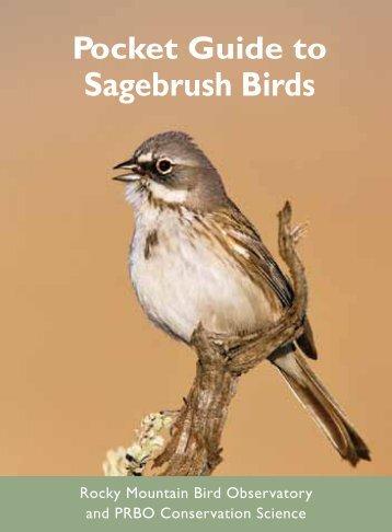 Sagebrush Birds - Point Reyes Bird Observatory