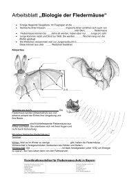 Arbeitsblatt Fledermäuse - Fledermaus-Bayern