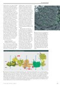 Störfall im Kraftwerk der Zelle - Forschung Frankfurt - Goethe ... - Seite 2