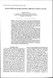 Azooxanthellate Scleractinia (Cnidaria: Anthozoa) - Western ...